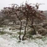 Nieve en el Torcal de Antequera - 11 de Noviembre de 2012