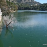 Arbol en el Pantano del Chorro