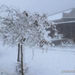 Arbol nevado en la copiosa nevada de 2015 en el Torcal de Antequera
