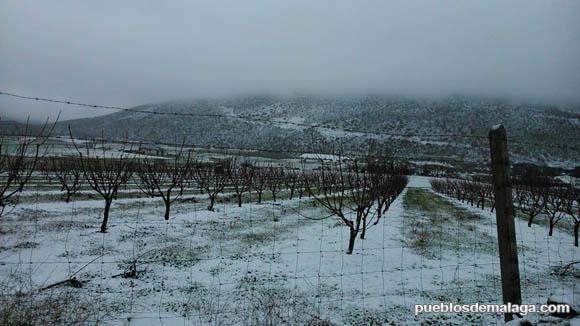 Campo nevado en Alfarnate