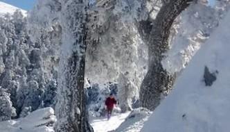 Nevada de Enero de 2015 en la Sierra de las Nieves, arbol con nieve