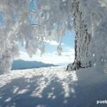 Nevada de Enero de 2015 en la Sierra de las Nieves