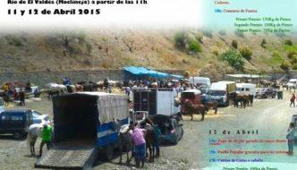 Feria de ganado en El Valdés ( Moclinejo )