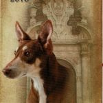 Feria del Perro de Archidona 2016