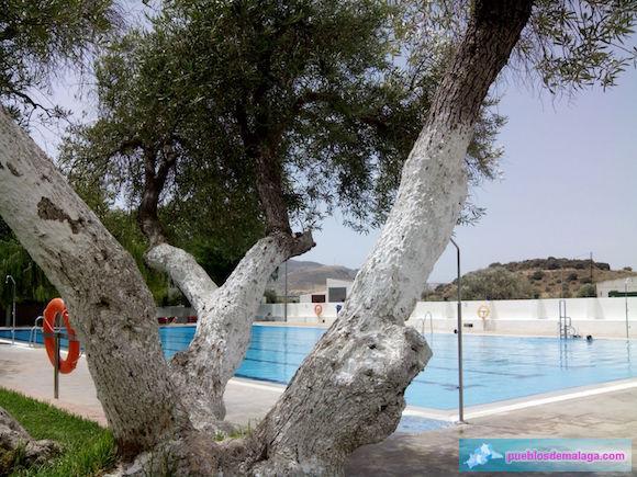 Olivo de la piscina de Almargen