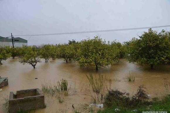 Árboles inundados en Cártama
