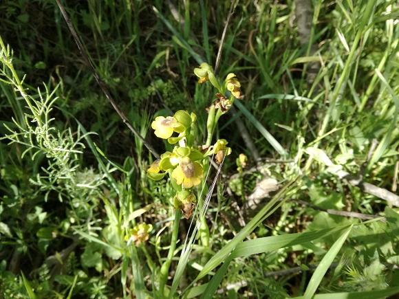 Orquideas silvestres