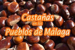 Castañas en los Pueblos de Málaga
